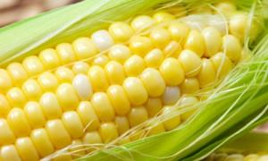 blog_corn13