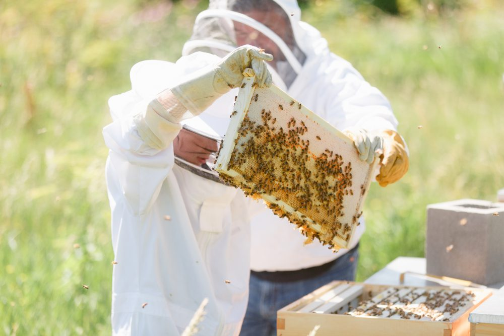 Taylor-Iowa-Honey-Company-Beekeeping